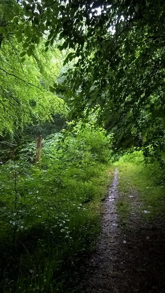 Mixed broadleaved woodland