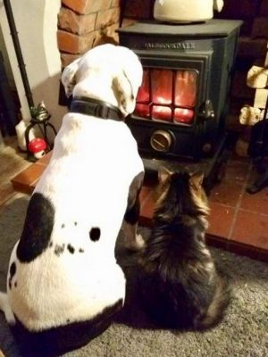 A large white and black bull terrier and a fluffy cat, both with their backs to the camera basking in the heat of a wood stove