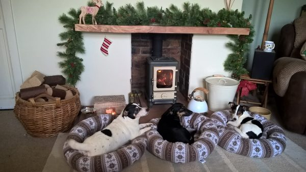 dogs in front of a wood-burner